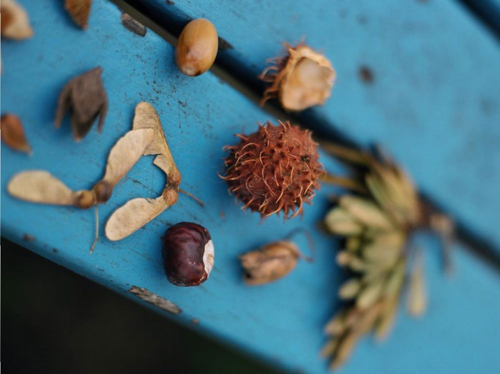 Objects from nature including an acorn sit on a blue plank of wood.