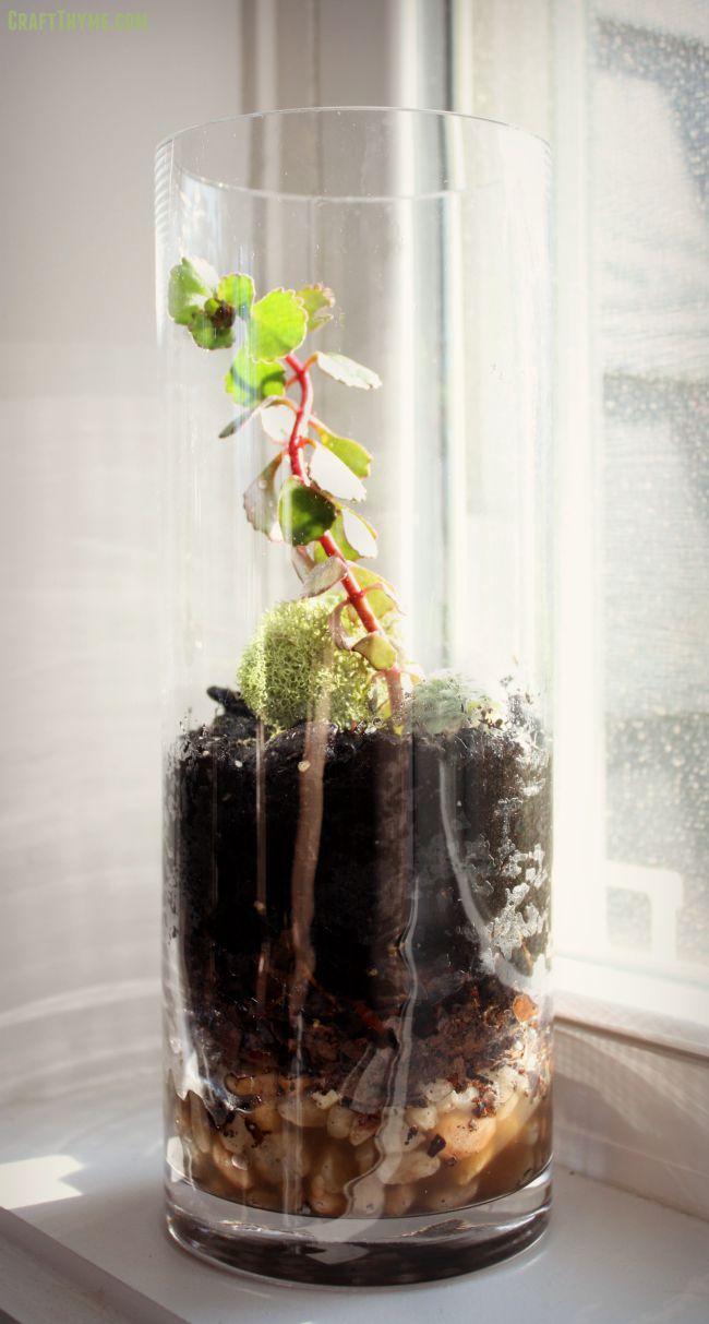 How to make a DIY Glass Terrarium