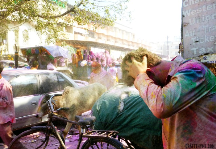 Our trip to Holi in India: Holi powders and cows