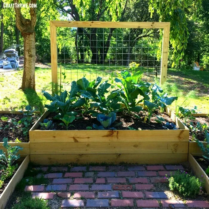 Completed version of our raised garden box. Also find information on how to prep your soil and make these goat wire trellises!