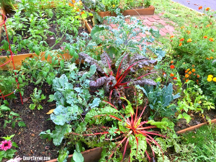 Craft Thyme late season garden