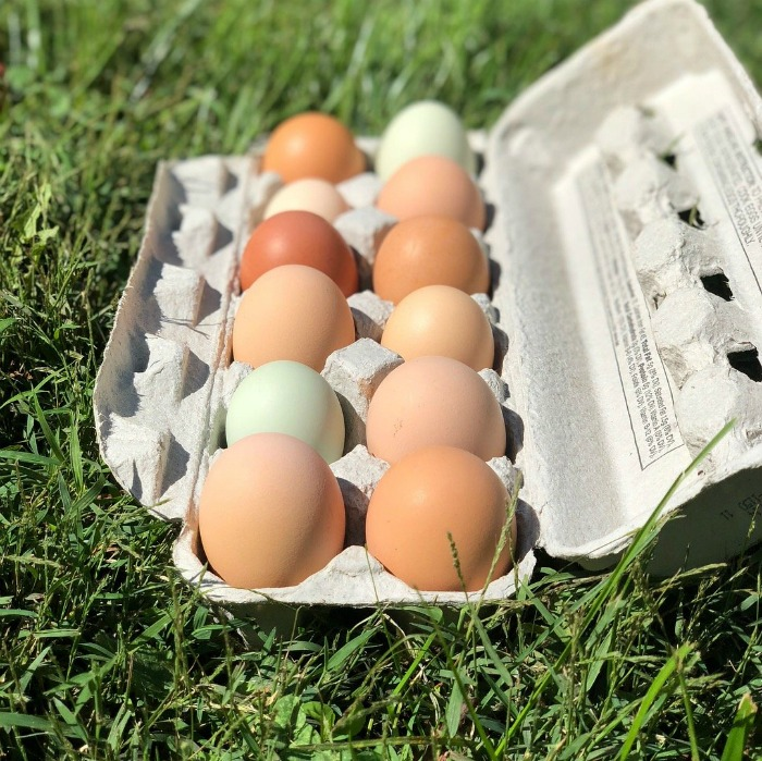 Fresh colorful eggs for sale in Asheville, NC
