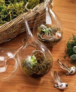 Hanging Teardrop Glass Vases
