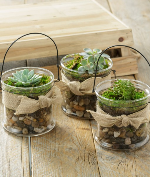 Glass Buckets with Succulents