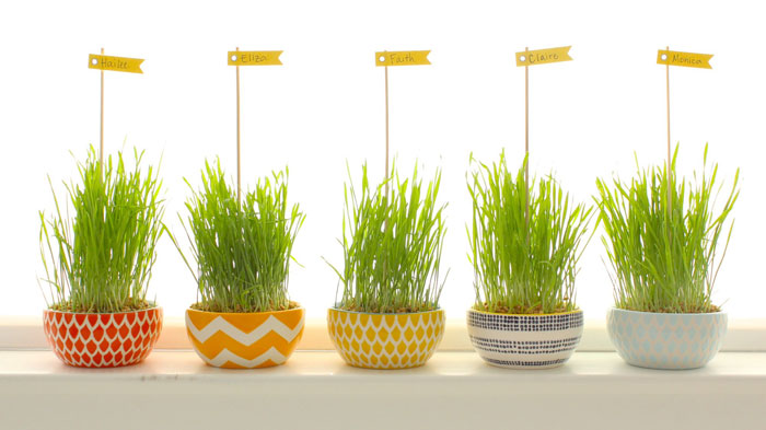 Wheatgrass as placecards from madeeveryday.com
