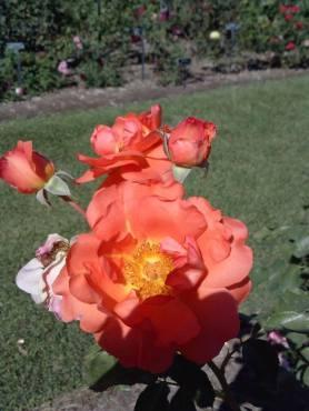flower22-copy