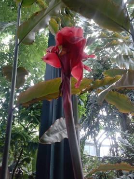 flower24-copy
