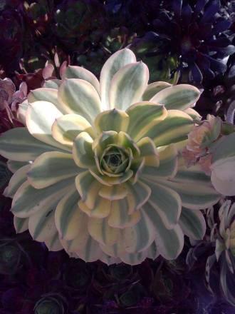 flower5-copy