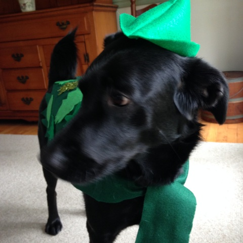 Second Star to the Right: Peter Pan Inspired Dog Costume (1/6)