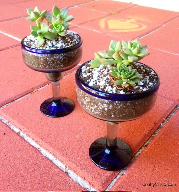 Cactus gardens made from Margarita glasses, CraftyChica.com