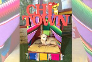 DIY Chihuahua bed, CraftyChica.com