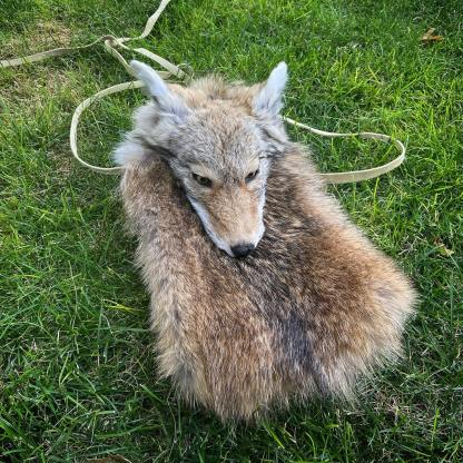 Masked Coyote sporran