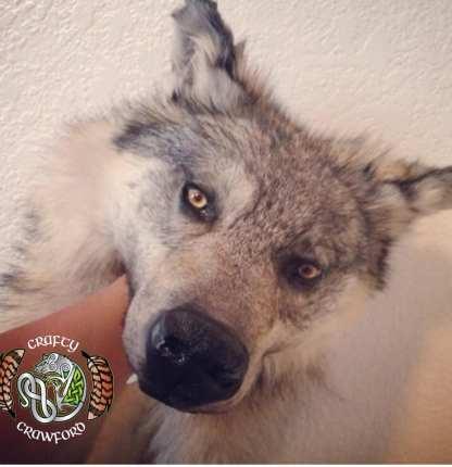 Wolf Headdress, wolfskin headdress
