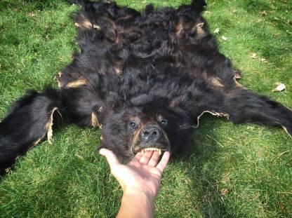 Bearskin headdress