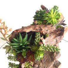 Rustic tree stump succulent arrangement