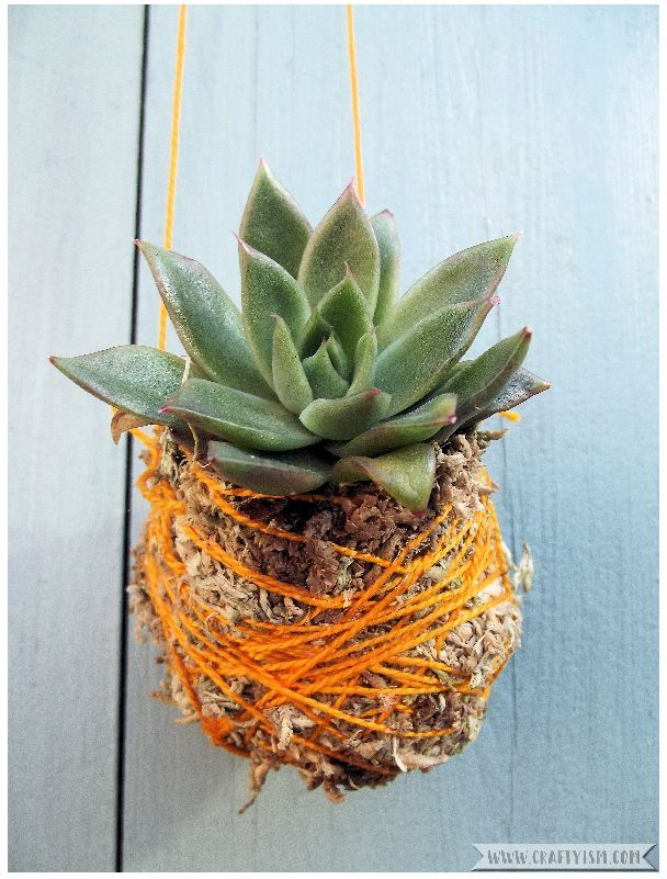 Review - Hanging Kokedama by Coraleigh Parker | Succulent Kokedama