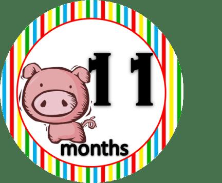 Pig - 11 months