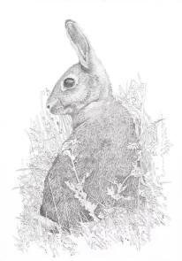 Duncan Osborne Wildlife Artist - Greetings Cards