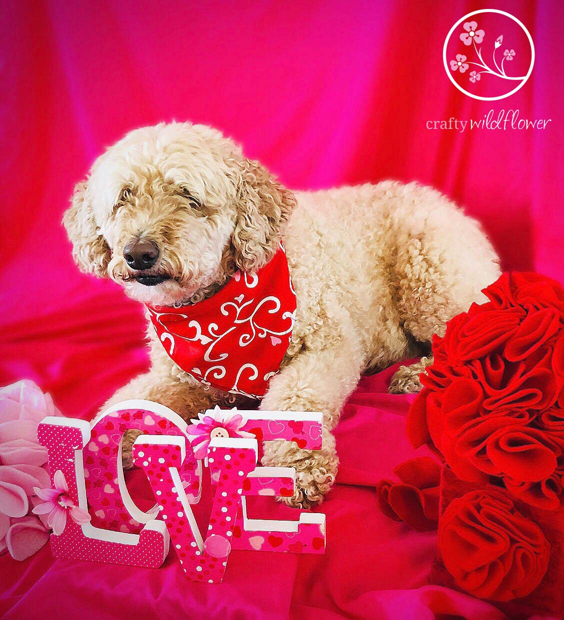 Happy Valentines Day From Logan and CraftyWildflower.com