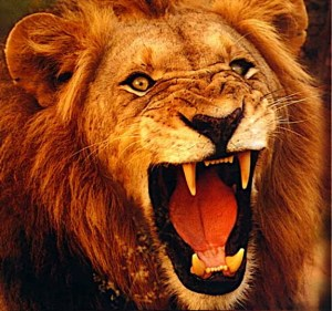 heart-of-a-lion