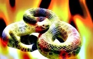 fiery-snake