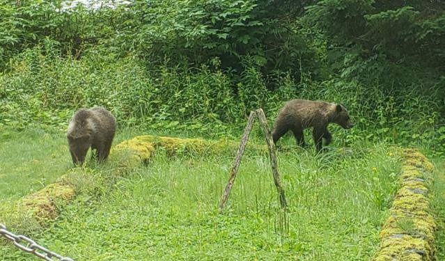 seward cubs