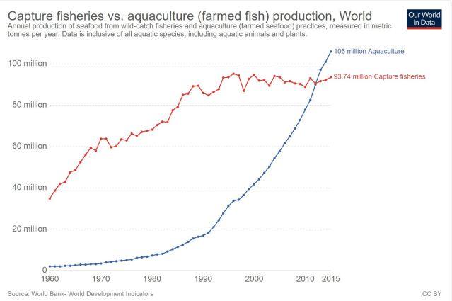 fish produtoin