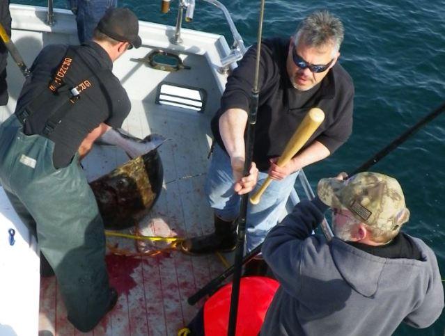 candopolous halibut