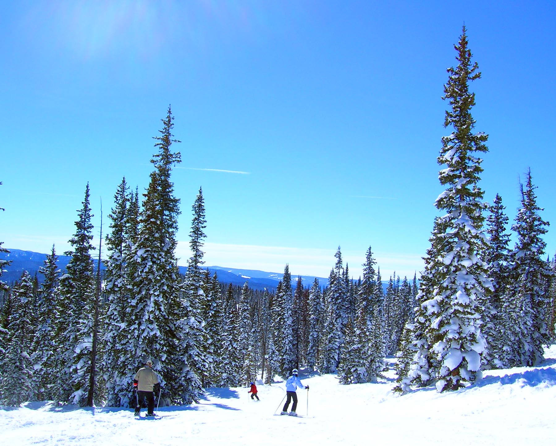 steamboat-snow-trees-ski-colorado