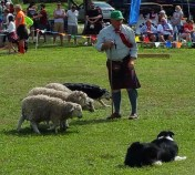 Sheep dog herding demonstration during the Southeast Florida Scottish Festival. (Craig Davis/Craiglslegz.com)