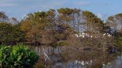 Wood storks nesting at Wakodahatchee Wetlands. (Craig Davis/CraigslegzTravels)