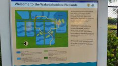 Wakodahatchee Wetlands is part of a wastewater filtration area in western Palm Beach County. (Craig Davis/CraigslegzTravels)