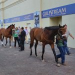 Horses ready to be saddled for an undercard race during the 2018 Pegasus World Cup program at Gulfstream Park in Hallandale Beach, Fla. (Craig Davis/Craigslegztravels.com)