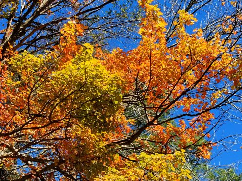 There was at least one colorful tree in Shelburne Falls in October 2018. (Fran Davis/CraigslegzTravels.com)