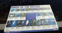 Ding Darling Wildlife Refuge on Sanibel Island has more than 245 species of birds. (Craig Davis/Craigslegztravels.com)