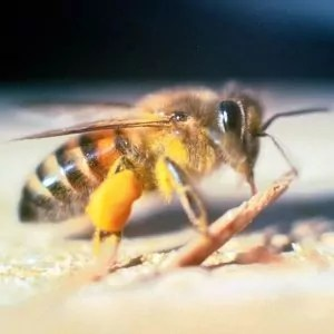 close-up-on-bee-in-queek-creek