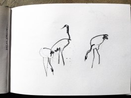 Cranes grazing ('blind' drawing)