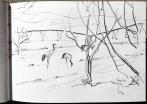 Cranes feeding at orchard edge; irrigation machine