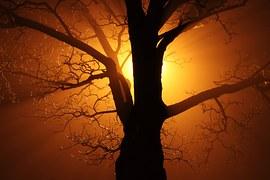 Baum , dahinter Sonneneinstrahlung, Die Seele