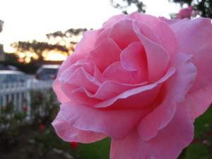 Stop and smell, feel, and taste the roses!