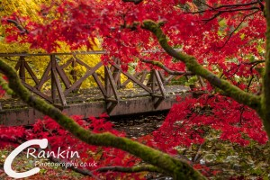 Benmore Gardens Bridge 2