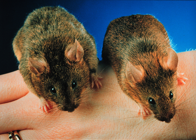 The 'Gaitlin Mouse', left...