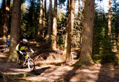 Hamsterley Forest Ride Guide Trails Mountainbiking