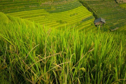 Ping_an_rice_fields