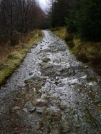 a river runs through Grizedale forest
