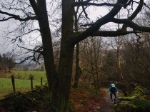 Still climbing towards Grizedale forest trails