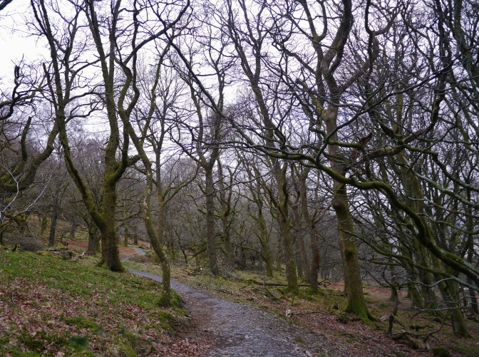 The spooky trees at Whinlatter