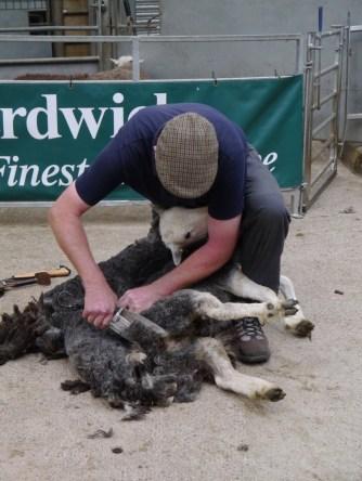 Hand shearing demo