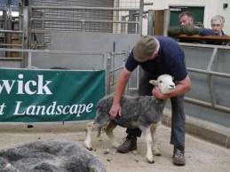Finished Herdwick ewe!