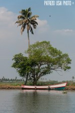 Back Waters - Kerala - India